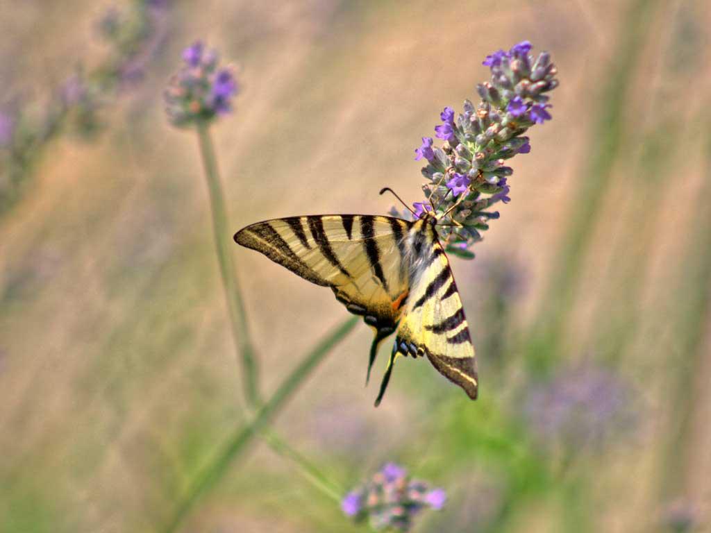 podere lecceta agriturismo pisa natura farfalla